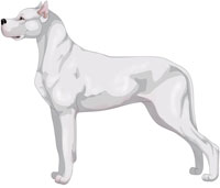 White Argentine Dogo