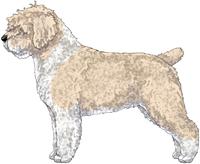 Beige & White w/Black Nose Spanish Water Dog