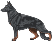 Bicolor Blue and Red German Shepherd Dog
