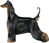 Black & Brindle Afghan Hound