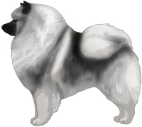 Black and Silver Keeshond