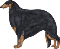 Black & Tan Borzoi