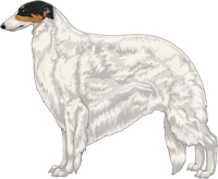 Black & Tan with Extreme White Piebald Borzoi