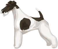 White and Black Wire Fox Terrier