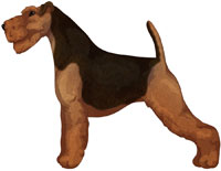 Black and Tan Welsh Terrier