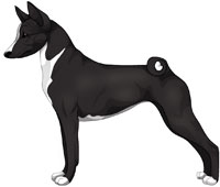 Black and White Basenji