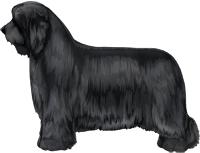 Black Bearded Collie