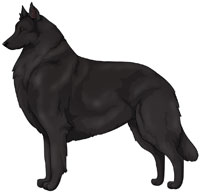 Black Belgian Sheepdog