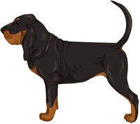 Black Bloodhound