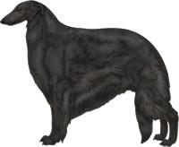 Black Borzoi