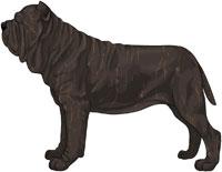 Black Brindle Neapolitan Mastiff