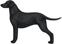 Black Curly-Coated Retriever