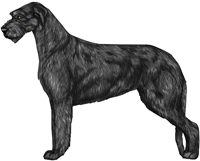 Black Irish Wolfhound