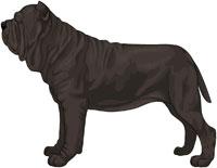 Black Neapolitan Mastiff
