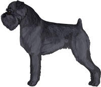 Rough Black Brussels Griffon