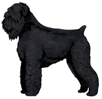 Black Black Russian Terrier