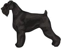 Black Standard Schnauzer