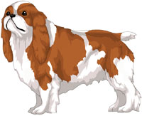 Blenheim English Toy Spaniel