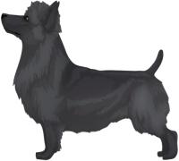Blue Australian Terrier