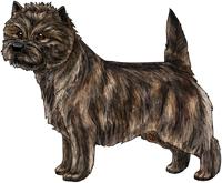 Brindle Cairn Terrier