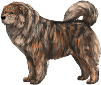 Brindle Caucasian Mountain Dog