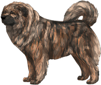 Brindle Masked Caucasian Mountain Dog