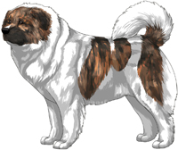 Brindle Pied Caucasian Mountain Dog
