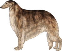 Brindled Sable Borzoi
