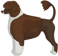 Brown & White Portuguese Water Dog