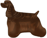 Brown American Cocker Spaniel