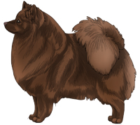 Brown German Spitz