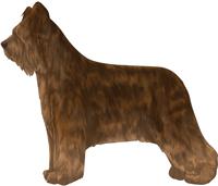 Brown Tawny Briard