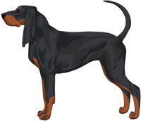 Black and Tan Black and Tan Coonhound