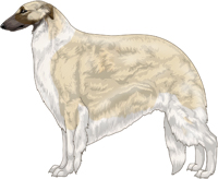 Cream with Black Mask and Irish White Markings Borzoi