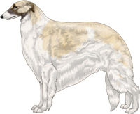 Cream with Black Mask and Piebald White Markings Borzoi