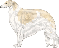 Cream with Piebald White Markings Borzoi