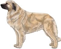 Fawn with Black Mask Estrela Mountain Dog