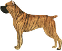 Fawn brindle with black mask Cane Corso