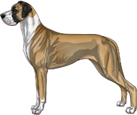 Fawn mantle Great Dane