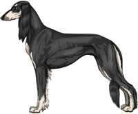 Black & Silver Feathered Saluki