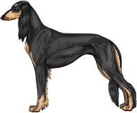 Black & Tan Feathered Saluki