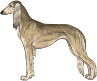 Fawn Grizzle Feathered Saluki