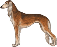 Red Grizzle Feathered Saluki