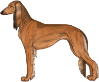 Red Sable Feathered Saluki