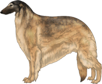 Gold Sable with Black Mask Borzoi