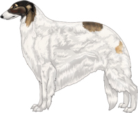 Gold Sable with Black Mask and Extreme White Piebald Borzoi