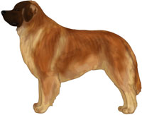 Golden Leonberger
