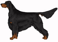 Black and Tan Gordon Setter
