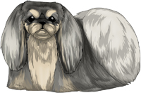 Gray & Tan Pekingese