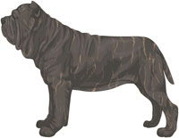 Gray Brindle Neapolitan Mastiff